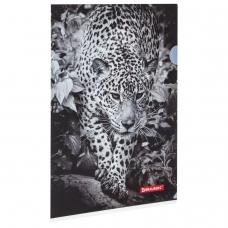 Папка-уголок BRAUBERG 'Леопард', А4, 150 мкм, цветная печать, 228040