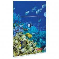 Папка-уголок BRAUBERG 'Водный мир', А4, 150 мкм, цветная печать, 228042